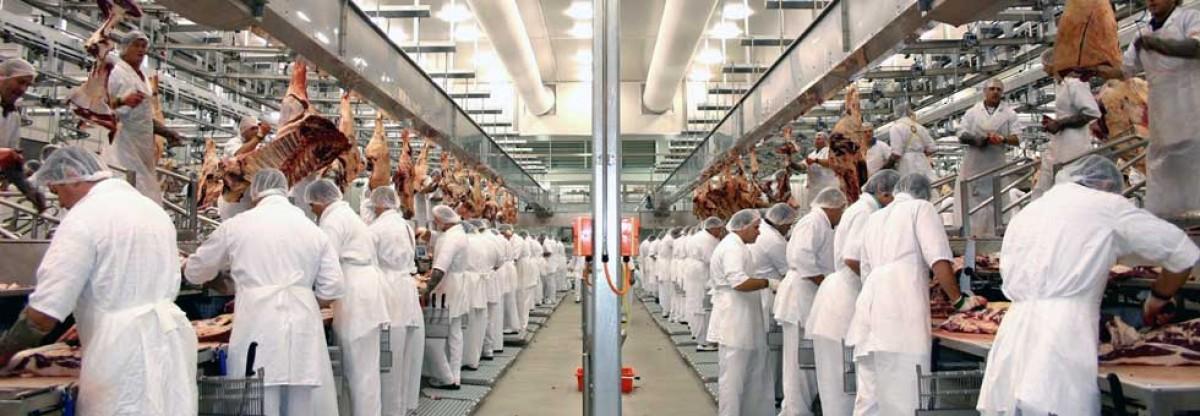 Treballadors en una cadena d'una indústria càrnia