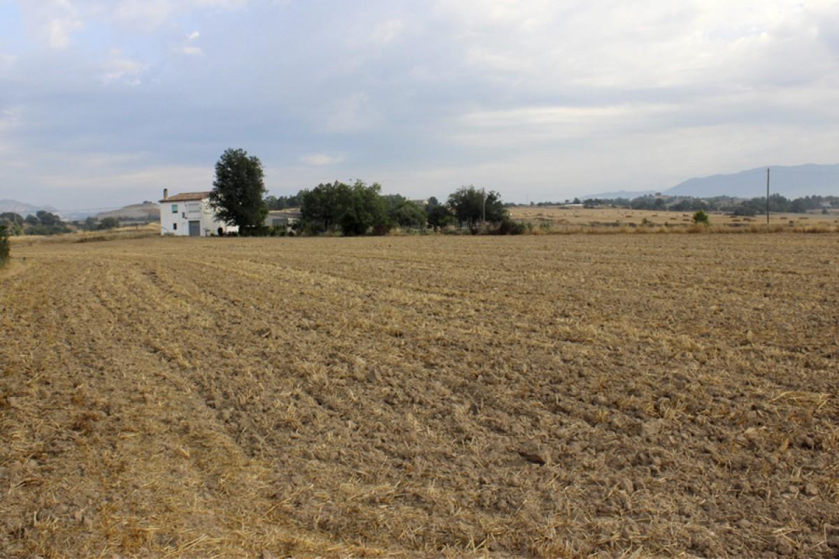 Els terrenys on es vol construir el Mercadona i la futura comissaria de Policia Local actualment són sòl agrícola no urbanitzable