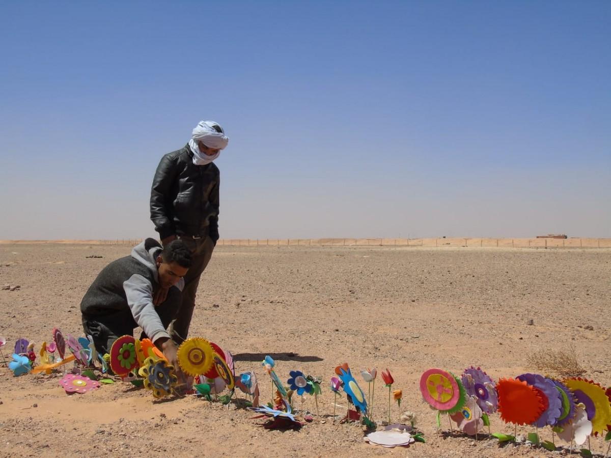 Flors simbòliques plantades al desert pels refugiats sahrauís