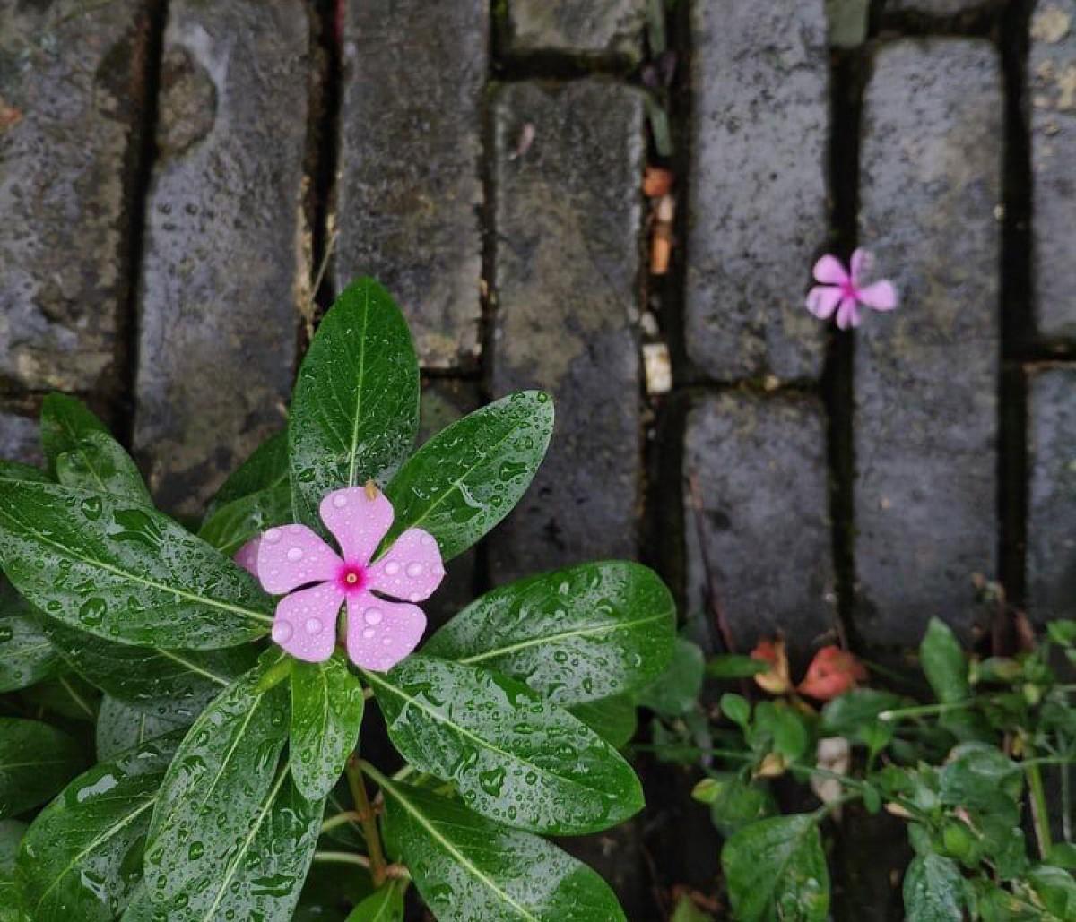 «Hem descobert que necessitàvem les flors, els núvols i els camins amb papallones més del que ens pensàvem»
