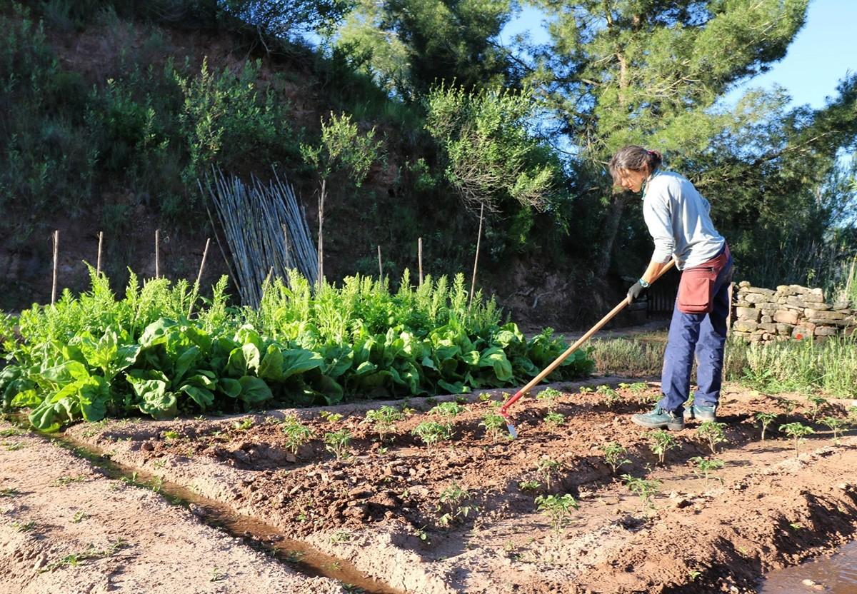 Treballs agraris en un dels horts d'Eixarcolant